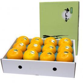 送料無料 愛媛産 せとか 赤秀品 2Lサイズ 3キロ (12玉) 柑橘 タンゴール オレンジ