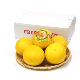 高知県産 土佐文旦(とさぶんたん) 秀品 3Lサイズ 2.5キロ (5から6玉) 送料無料 柑橘 ぶんたん とさ
