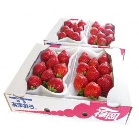 送料無料 福岡県産 あまおう DX:デラックス 2箱セット (270g×4P) イチゴ 苺