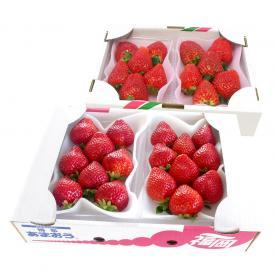 送料無料 栃木産スカイベリー 600gと福岡産あまおう 540gセット 合計2箱 イチゴ 苺