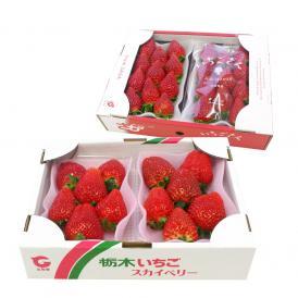 送料無料 栃木産 スカイベリー 600gと佐賀産 いちごさん 540gセット 合計2箱 イチゴ 苺