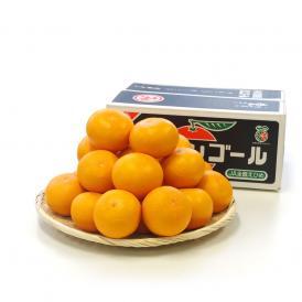 送料無料 愛媛県産 三崎の清見オレンジ 特秀品 2Lサイズ 5キロ箱 (23玉前後) 清見 柑橘 オレンジ