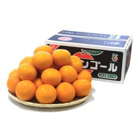 送料無料 愛媛県産 三崎の清見オレンジ 特秀品 Lサイズ 5キロ箱 (26玉前後) 清見 柑橘 オレンジ