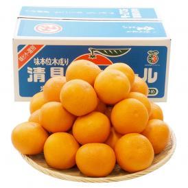送料無料 愛媛県産 三崎の清見オレンジ 秀品 Lサイズ 5キロ箱 (26玉前後)  柑橘 タンゴール かんきつ
