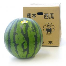送料無料 熊本県産 超大玉スイカ 秀品 4Lサイズ以上 10キロ 西瓜 すいか