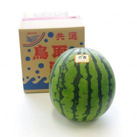 送料無料 鳥取県産 超大玉スイカ 秀品 4Lサイズ以上 1玉(約9.5キロ) すいか 西瓜