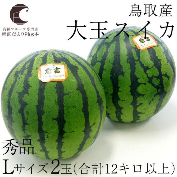 送料無料 鳥取県産 大玉スイカ 秀品 Lサイズ以上×2玉(約6キロ×2玉)合計12キロ以上  すいか 西瓜02
