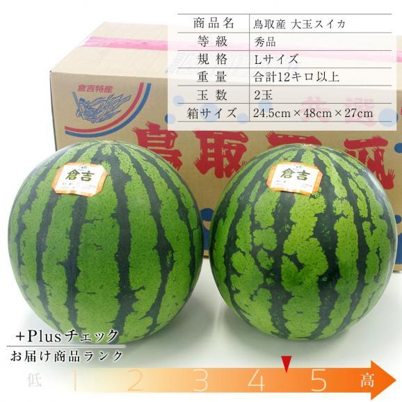送料無料 鳥取県産 大玉スイカ 秀品 Lサイズ以上×2玉(約6キロ×2玉)合計12キロ以上  すいか 西瓜03