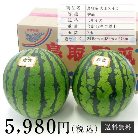 送料無料 鳥取県産 大玉スイカ 秀品 Lサイズ以上×2玉(約6キロ×2玉)合計12キロ以上  すいか 西瓜06