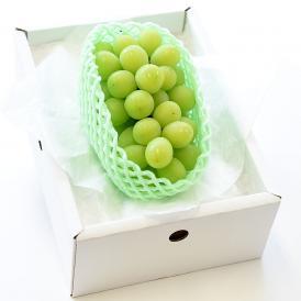 送料無料 山梨県産 ハウス栽培 シャインマスカット  青秀品 500g 1房化粧箱 ぶどう、葡萄、ブドウ、マスカット