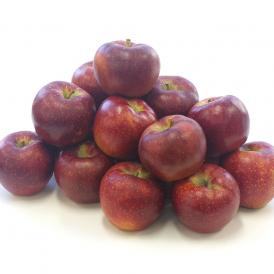 送料無料 長野県産 秋映(あきばえ) 約5キロ(14玉から18玉) りんご 林檎