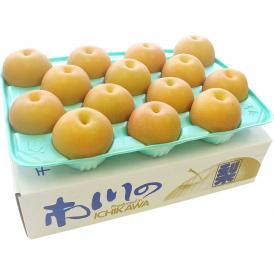 送料無料 千葉県産 柏井の梨 あきづき梨 秀品 5キロ (12玉から16玉) なし 和梨