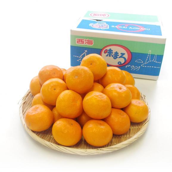 送料無料 長崎県産 JAながさき西海 西海みかん 味まる  青秀以上  LからMサイズ 3キロ (24玉から30玉) みかん、早生みかん01