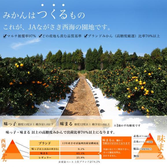 送料無料 長崎県産 JAながさき西海 西海みかん 味まる  青秀以上  LからMサイズ 3キロ (24玉から30玉) みかん、早生みかん04