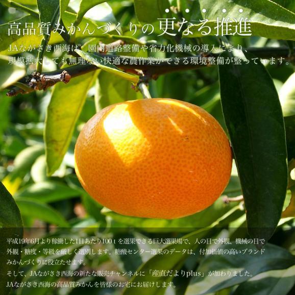 送料無料 長崎県産 JAながさき西海 西海みかん 味まる  青秀以上  LからMサイズ 3キロ (24玉から30玉) みかん、早生みかん05
