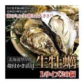 牡蠣・カキ・かき 北海道厚岸産の殻付き生牡蠣 大Lサイズ 20個入 牡蠣ナイフ付き