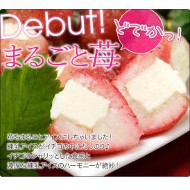 Debut!超巨大 どでかっ♪練乳 苺アイス まるごと苺 20個