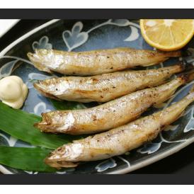 (送料無料)北海道日高産の生干し『本ししゃも』オス・メス(各10尾)計20尾 これが本当の柳葉魚(ししゃも)≪北海道出荷≫