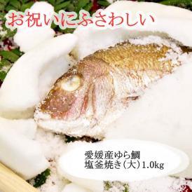愛媛産ゆら鯛 塩釜焼き(大)1.0kg
