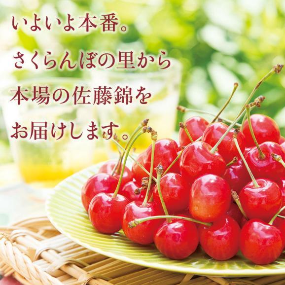 「紅秀峰 極上」1kg 桐箱入 本詰め 7月上旬より発送開始04