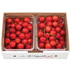 近年人気、お中元に最適です。真っ赤な色づき濃厚な甘みの紅秀峰。