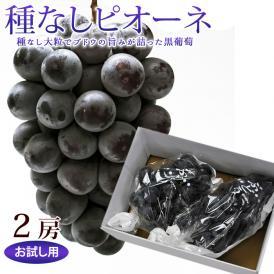 種なし葡萄 ピオーネ 2房 (500g~1kg前後)