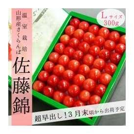 [超早出し]山形県産さくらんぼ 佐藤錦 300g Lサイズ手詰 温室栽培