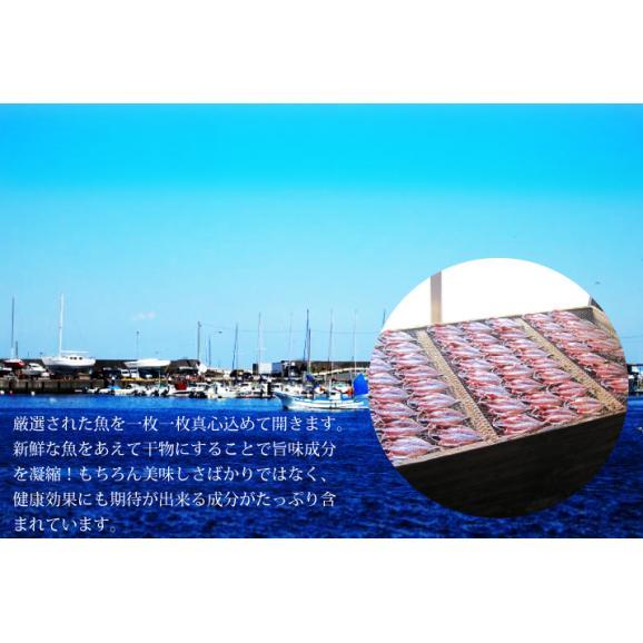 静岡・伊東 こだわり干物「お試しセット」【送料無料】02