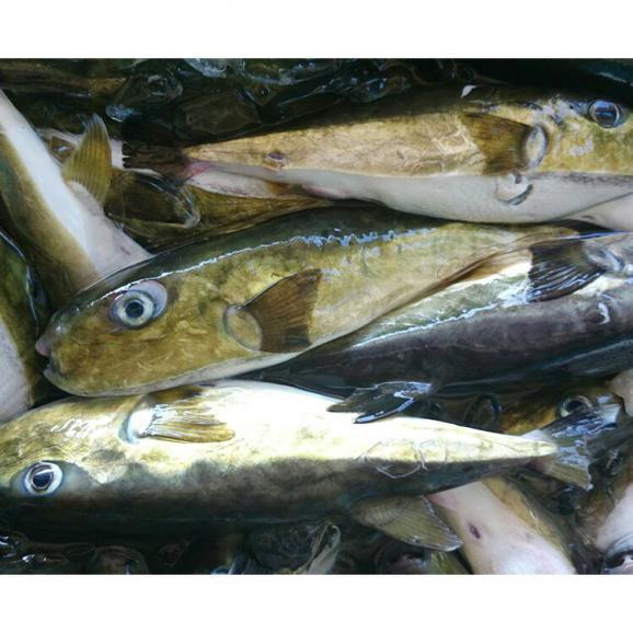 【送料込】【漁師の食卓】黄金フグのみりん干し 3袋入り04