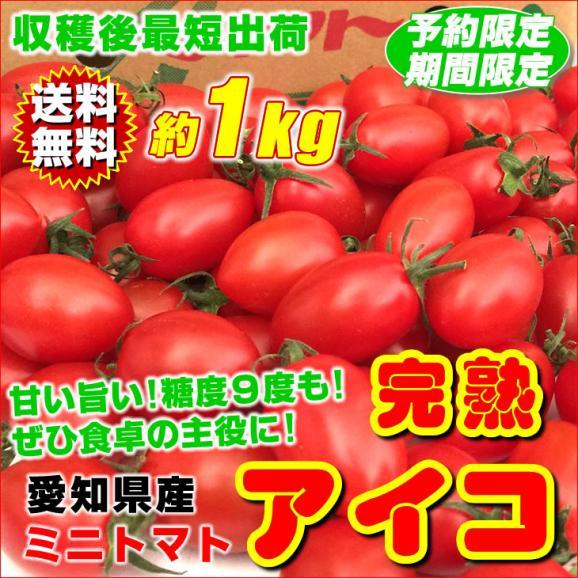 完熟ミニトマト アイコ 愛知県産 1kg 送料無料 糖度9度も♪ 究極の糖度と美味しさ トマトの常識覆す01