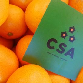 【宇和島から旬の味わいをお届け】柑橘ソムリエ厳選 温州みかん 【5kg】
