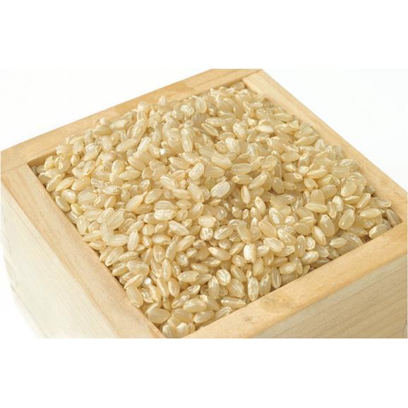 ★新米★ 平成30年 新潟県糸魚川産コシヒカリ 玄米 25kg02