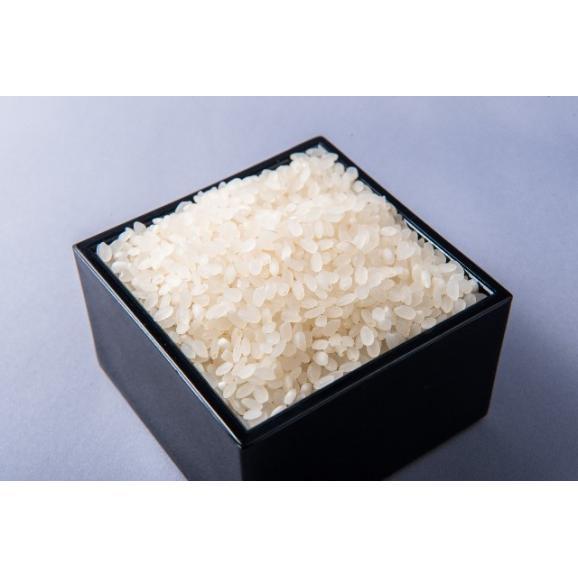 【新米予約受付開始】令和2年 新潟県糸魚川産新之助  白米  5kg02