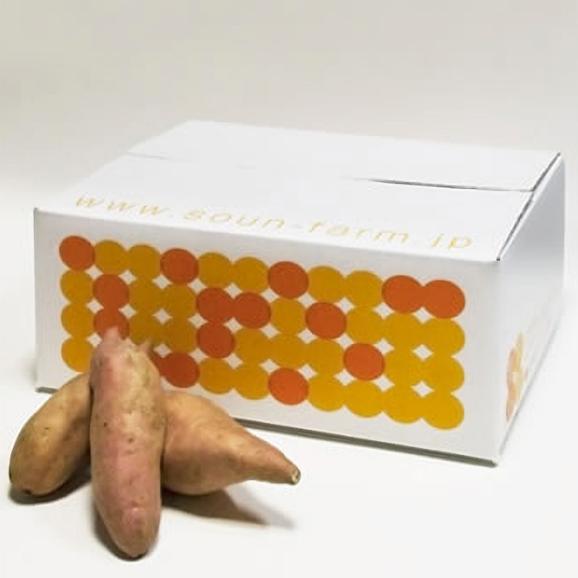 早雲蜜芋 3kg箱02