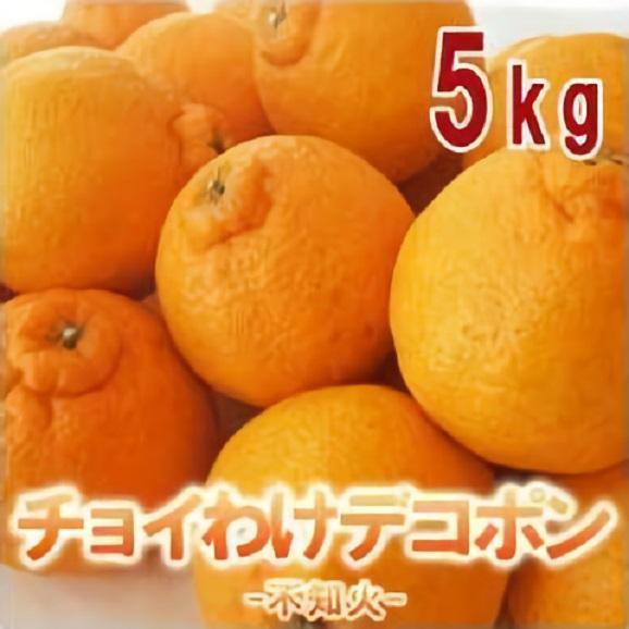 【訳あり】チョイわけデコポン5kg(12~20玉前後)デコポンの愛称でおなじみの不知火01