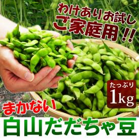 夏ビールの定番「新鮮枝豆を産地直送♪」山形県鶴岡市産  まかない(訳あり)白山だだちゃ豆 1kg※枝豆、えだまめ、エダマメ、豆、まめ、マメ、夏ギフト