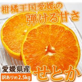 愛媛産 訳ありせとか 約2.5kg(ご自宅用)【送料無料】