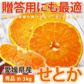 贈答用にも最適!! 愛媛産せとか 秀品 約3kg (10〜15玉前後)