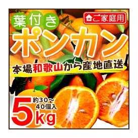 和歌山産 ご家庭用 葉付きポンカン5kg 約30〜40個