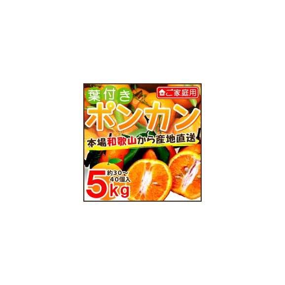 和歌山産 ご家庭用 葉付きポンカン5kg 約30〜40個01
