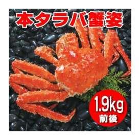 特大 本タラバ蟹姿 1.9kg前後×1尾 【送料無料】《浜ゆで急速冷凍》