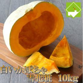 北海道富良野産 白いカボチャ 雪化粧 10kg 送料無料