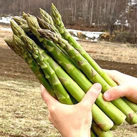 アスパラガス 北海道富良野産 グリーンアスパラ 極太 2Lサイズ 1kg 送料無料