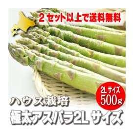 「2セット以上で送料無料」ハウス栽培 北海道富良野産 グリーンアスパラガス 極太 2Lサイズ 500g 【4月上旬から5月上旬発送】