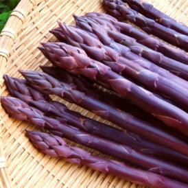 北海道富良野産 ラベンダーアスパラ(紫アスパラ)SからLサイズ混み 500g