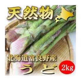 北海道富良野産 天然 うど 2kg 送料無料