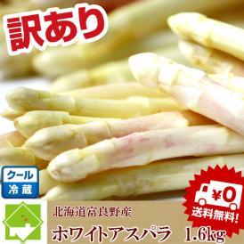 アスパラ 北海道富良野産 訳あり ホワイトアスパラ 1.6kg 【送料無料】