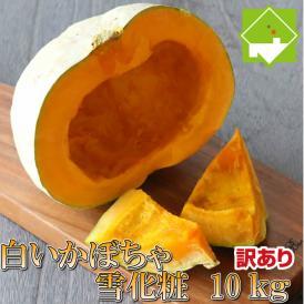 北海道富良野産 白いカボチャ 雪化粧 訳あり 10kg 送料無料
