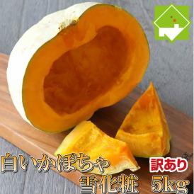 北海道富良野産 白いカボチャ 雪化粧 訳あり 5kg 送料無料