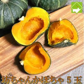 北海道富良野産 坊ちゃんかぼちゃ 5玉【送料無料】